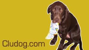 cludog banner